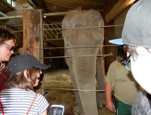 """NESTER: """"Traumnacht"""" im Zoo"""